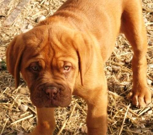 varias cachorros y dakota 014