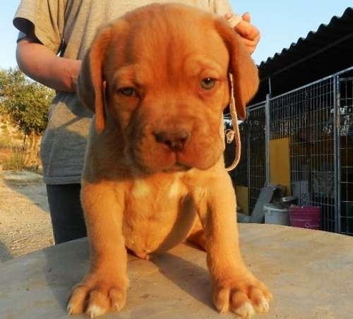 cachorros inka x adriano 024