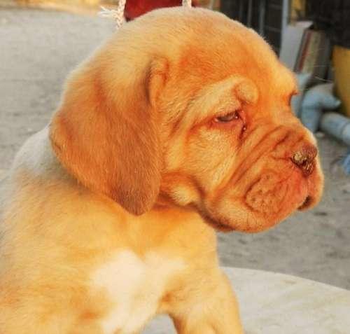 cachorros inka x adriano 045