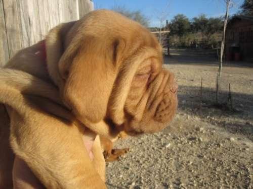 varias luismi pandora y cachorros 041